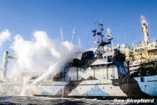 A Nisshin Maru a Steve Irwin gépházát támadja vizágyúival