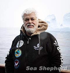 news-140709-1-Paul-Watson-Iceberg-240w