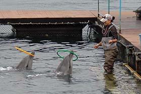 news-151112-1-3-captive-dolphins-perform-tricks-280w